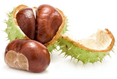 Aesculus Hippocastanum seed extract