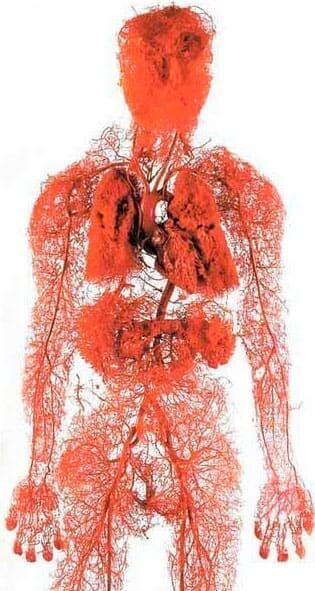 trageți corpul cu varicoză greutatea varicoasă afectează
