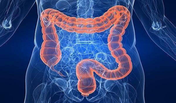 infecții parazitare la om paraziți în calmar